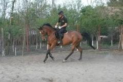 Antrenament (2)