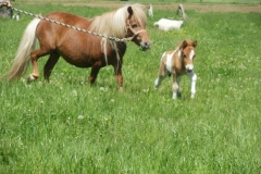 Caii nostri (10)