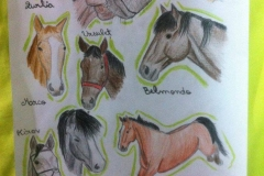 Caii nostri (12)