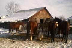 Caii nostri (13)