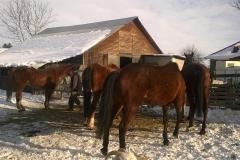Caii nostri (14)