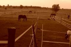Caii nostri (20)