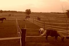 Caii nostri (21)