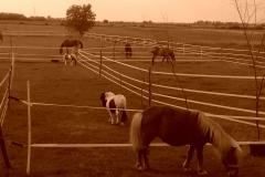 Caii nostri (22)
