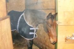 Caii nostri (3)