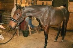 Caii nostri (4)